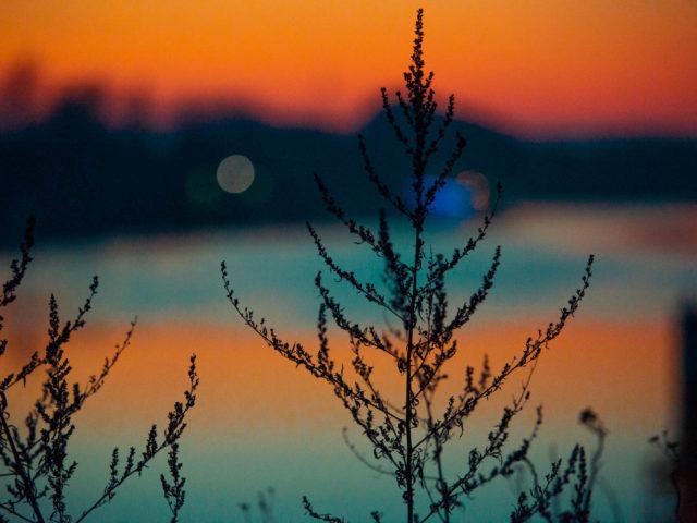 Sonnenuntergang am Schiersteiner Hafen