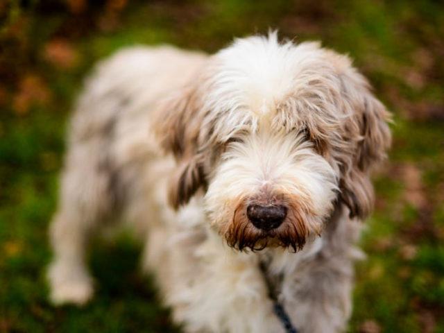 Hundefotografie Ehrenamt
