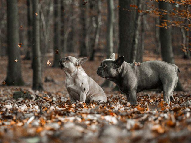 Hundefotografie_wiesbaden